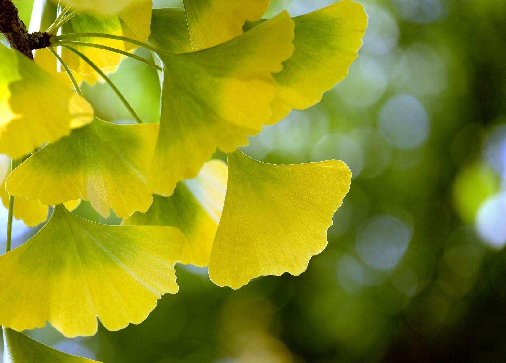 Httpbalanceaustinleswordpress201103green yellow httpbalanceaustinleswordpress201103green yellow flowersg japanese tattoo pinterest yellow flowers green flowers and flower images mightylinksfo